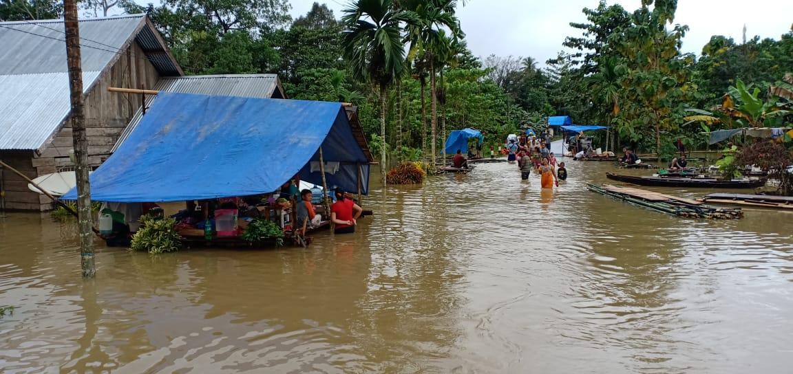 Akibat Banjir di Konawe Sawah dan Kebun Merica Gagal Panen