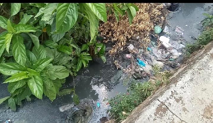 Limbah Tahu dan Ayam Potong Cemari Lingkungan Kecamatan Bukit Kemuning