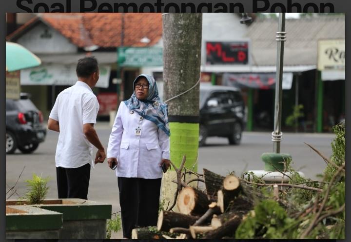 Bupati dan Sekda Geram Soal Pemotongan Pohon Trembesi di GOR Trisanja