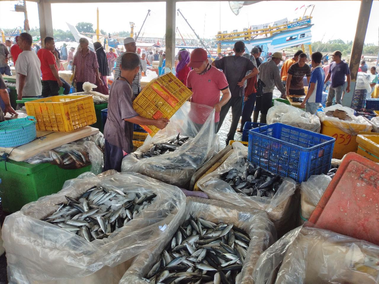 Hasil Tangkapan Nelayan Melimpah, Harga Ikan Laut Anjlok