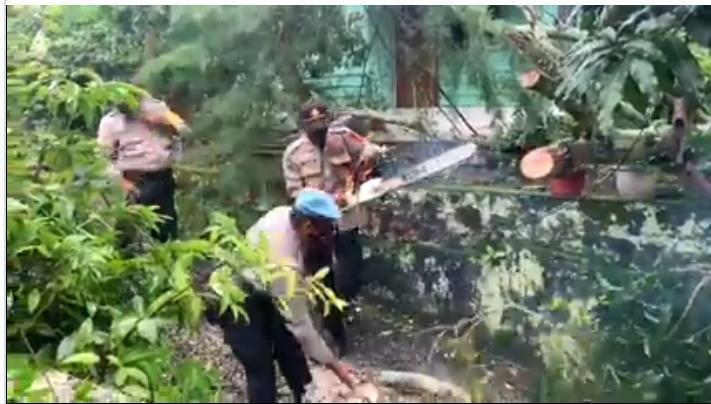 Musim Hujan, Polsek Tanjungpinang Barat Tebang Pohon Tua