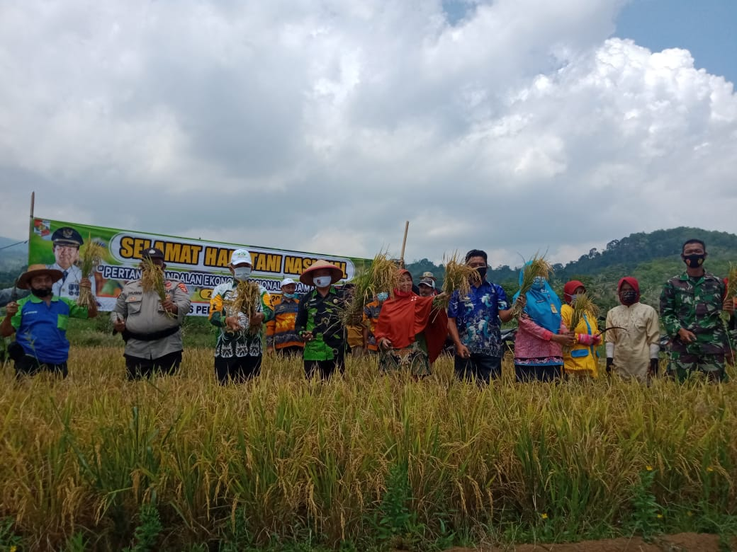 Peringati Hari Tani Nasional Dinas Pertanian Gelar Panen Raya Kasubsektor Abung Tinggi Berikan Apresiasi